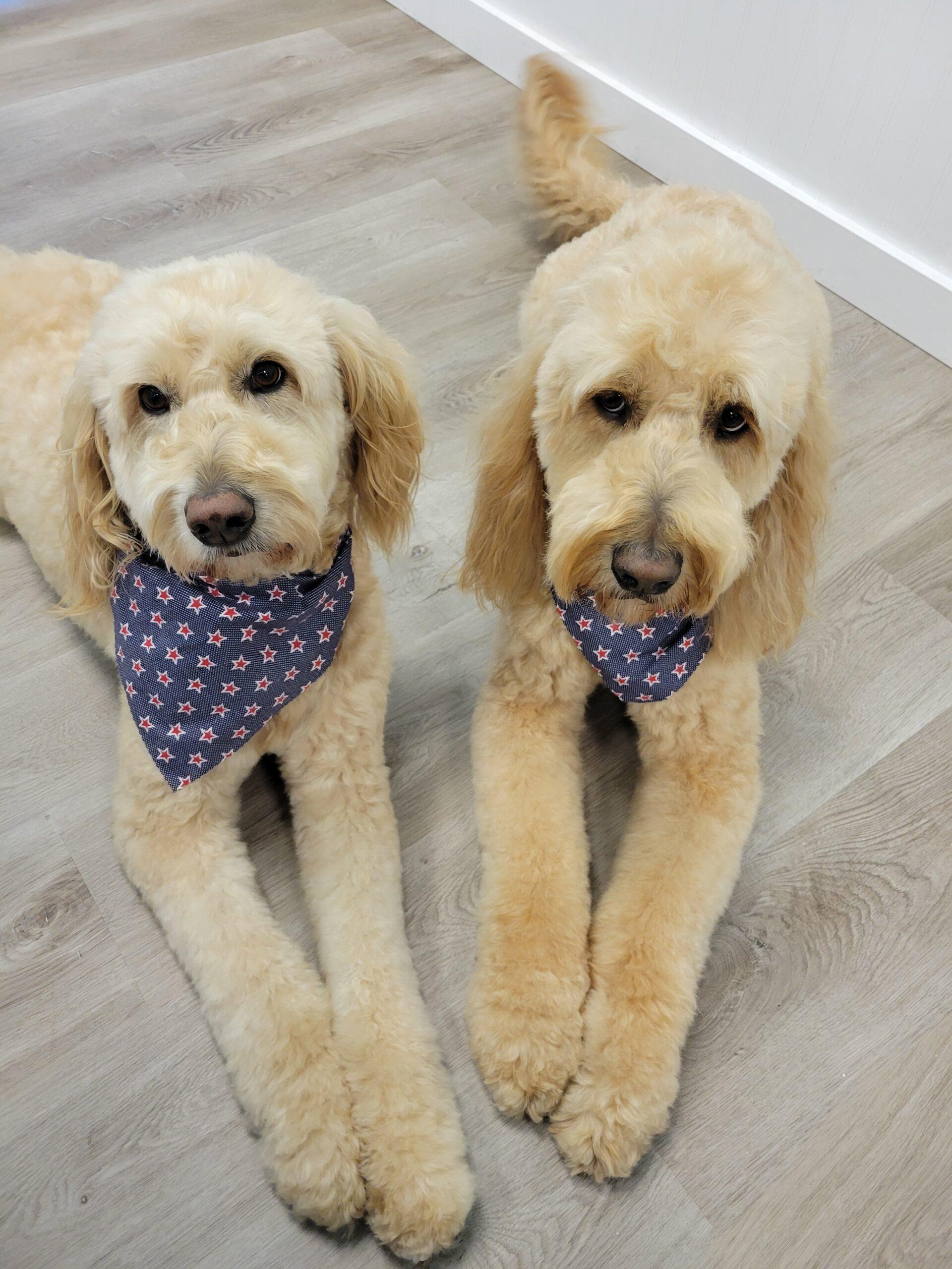 Le Patou Canine Salon