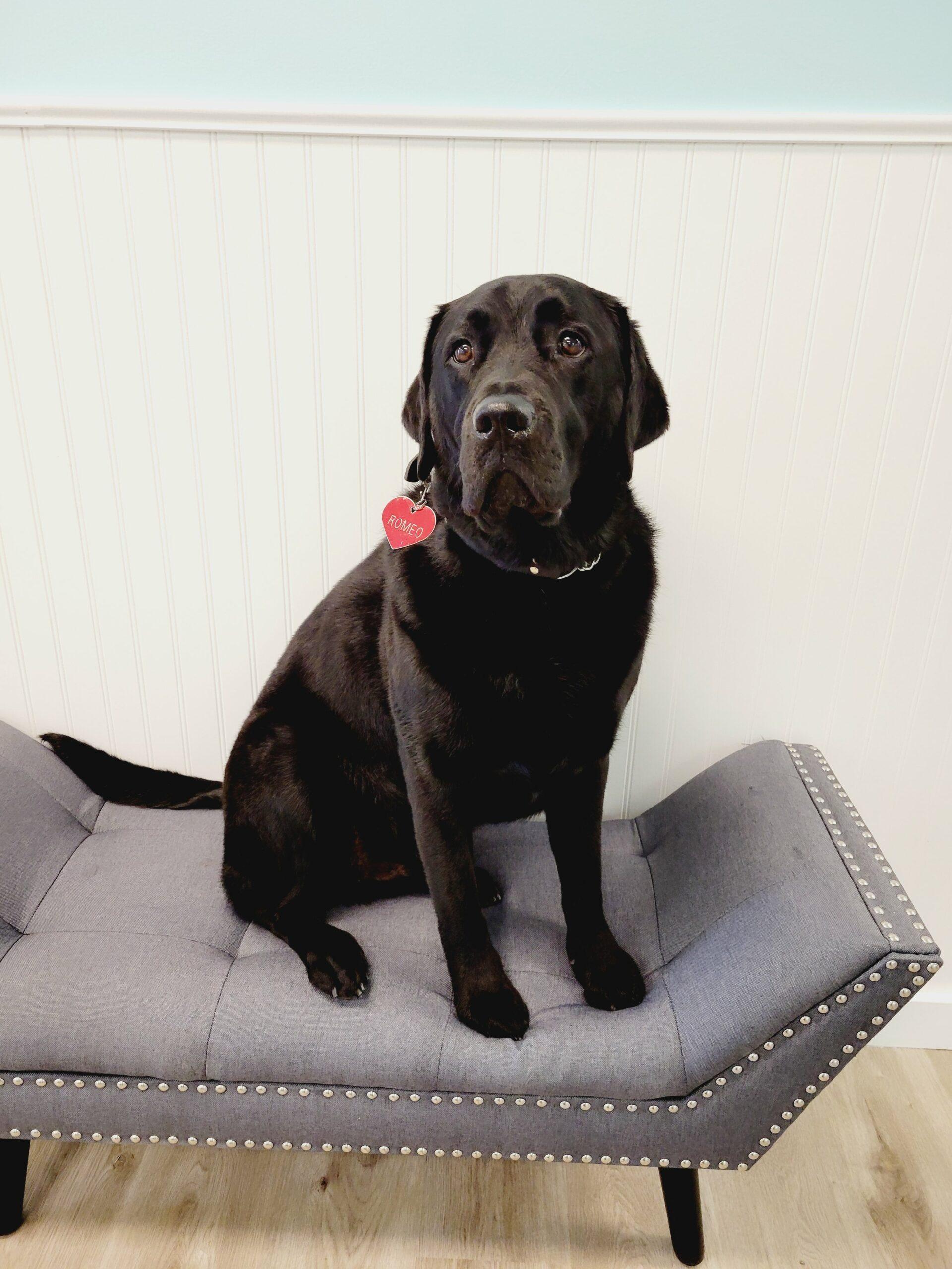 Le Patou Canine Salon, Harbor Springs, MI